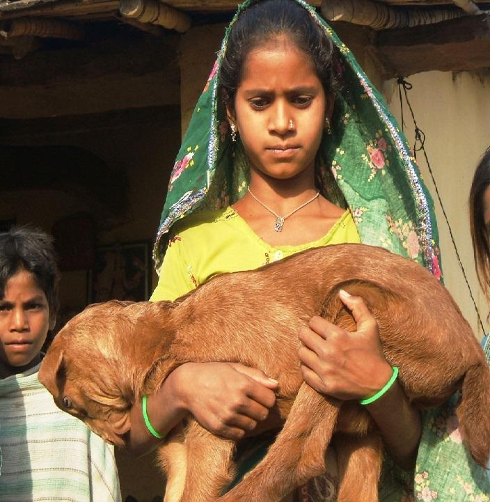 インドの家畜・生計向上財団(The Goat Trust)が新規加盟