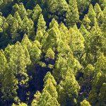 アクメア(オランダ)が植林プログラムで100万本の木を植える